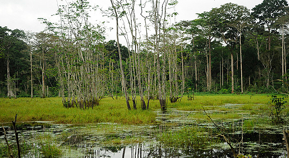 Forêt Centrafrique Lac près de Sangha 2010